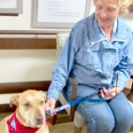 Pet Therapy with Therapy Dogs International